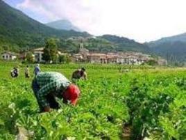 braccianti-agricoli