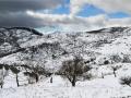 neve-roccaforte-gennaio-2017 (3)