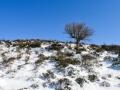 neve-roccaforte-gennaio-2017 (4)