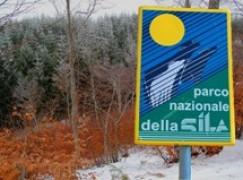 """Ha Riaperto il """"Parco Avventura"""" all'interno del Parco Nazionale della Sila"""