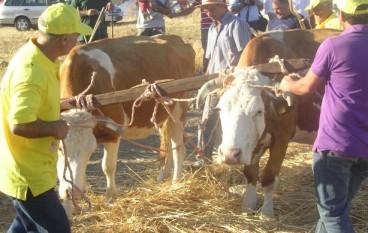 Condofuri (Rc), festa della Trebbiatura 2010