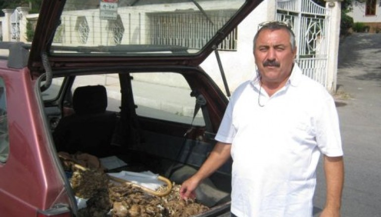 Area Grecanica, scoperto fungo agnello da 40 kg