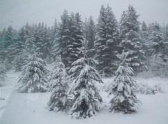 Maltempo, Anas: allerta neve al centro sud