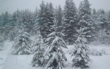 Neve in Sila e temperature vette a -10