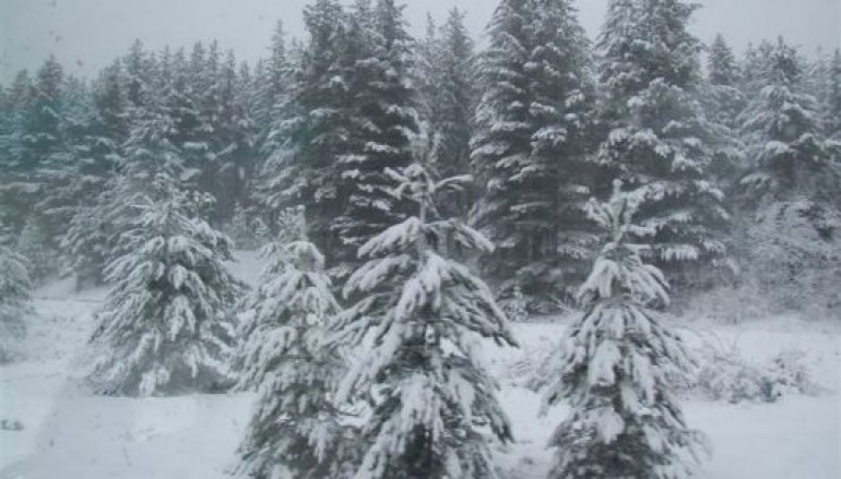 Calabria, in Sila si scia mentre a Gambarie non c'è abbastanza neve