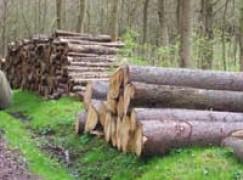 San Donato Di Ninea (CS), rubano legna, deferite 2 persone