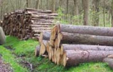 Sila (CS), dieci arresti per taglio e furto di legname nel Parco nazionale