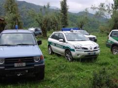 Cittanova (RC), abbattuti 4 bovini vaganti