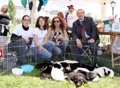 Catanzaro, Traversa e Ferro con le associazioni animaliste
