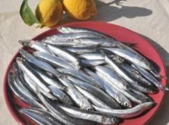 Insalata di sardine