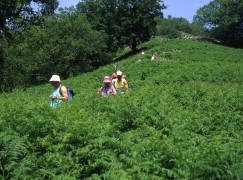 Gioiosa Jonica, escursionisti tra i mulini della fiumara Gallizzi