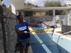Condofuri (RC), trovato serpente in piscina. Intervento dei volontari dell'Anpana