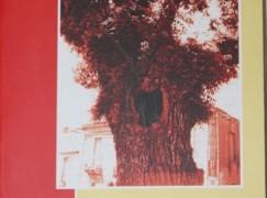 """Pubblicato il nuovo libro di Pasquale Manti """"San Lorenzo, il paese dell'olmo. Memorie di Valletuccio"""""""