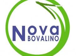 Interrogazione di Nova Bovalino sul problema del randagismo