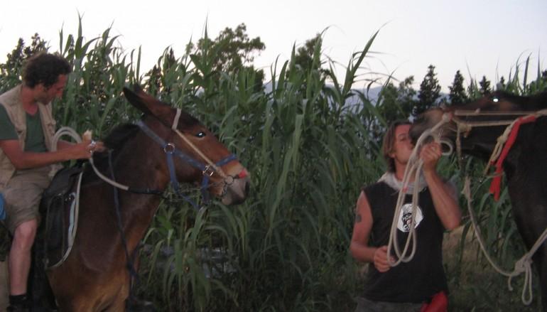 Eco- mulo 2012, la storia di due giovani partiti dalla Sicilia in sella ai loro muli e diretti a Roma