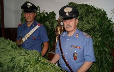Melito Porto Salvo (Rc), i carabinieri sorprendono coltivatore di marijuana