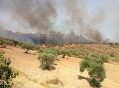 Saracena (CS), incendi, evitato il peggio grazie al contributo dei cittadini