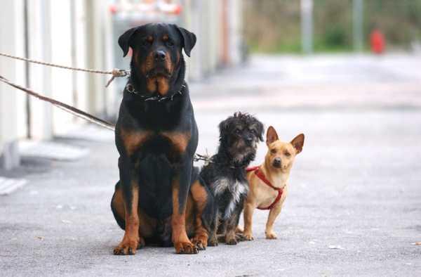 Reggio calabria dacci una zampa su condizioni canile - Portare il cane al canile ...