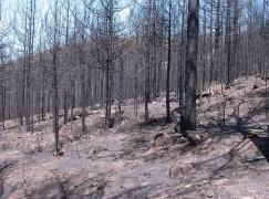 """""""L'Aspromonte non deve essere abbandonato dopo il grande incendio"""": il PdCI chiede urgenti interventi"""