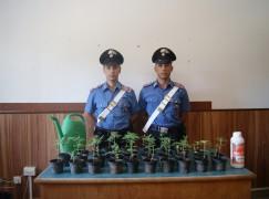 Castellace di Oppido Mamertina (RC), un arresto per produzione di sostanze stupefacenti