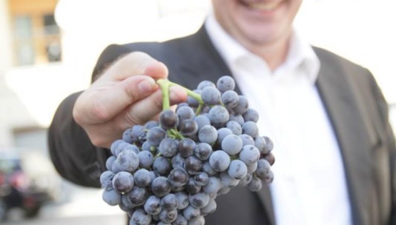 """Comprate il vino Cirò, l'invito del Sindaco: """"Ottima annata"""""""