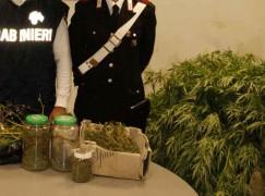 Palmi (RC), un arresto per produzione e detenzione di sostanza stupefacente