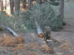 """Legambiente: """"Un vile scempio nei boschi della Sila"""""""
