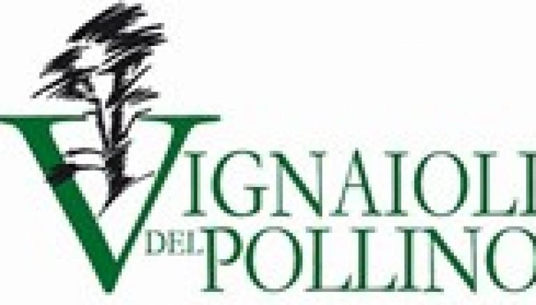 """""""I Vignaioli del Pollino"""" premiati dal Gambero Rosso"""