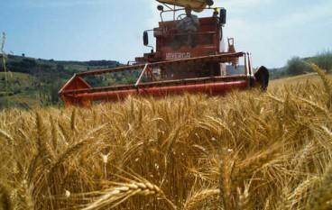 Regione, 40 Mln per le domande uniche in agricoltura