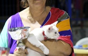 Successo per la mostra felina a Siderno