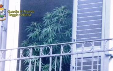 Reggio Calabria: coltivava marijuana in casa, arrestato