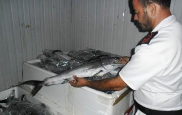 Rossano (CS), sequestrati tonni rossi e pesce spada sotto misura