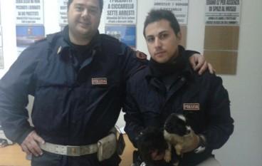 Gallico, cuccioli gettati nell'immondizia: salvati dalla Polizia