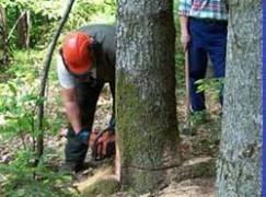 Lavoratori forestali messi in cassa integrazione nel periodo invernale