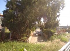 Pericolo alberi a Bocale II, intervento tempestivo dei Vigili del Fuoco