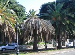 Reggio Calabria, contrattualizzati 102 Lsu/Lpu