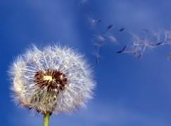 Allergie, Arpacal pubblica report 2013 sul monitoraggio dei pollini