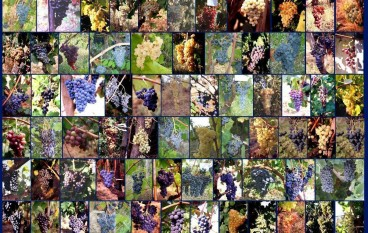 Calabresi di Parma organizzano degustazione di vini calabresi