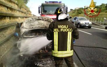 """Catanzaro, terribile incendio al """"Parco della Biodiversità Mediterranea"""""""