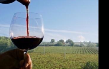 Lamezia Terme, degustazione vino novello 2014