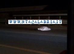 Reggio Calabria, innumerevoli vittime sulla strada