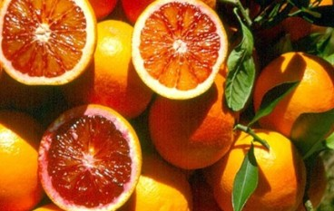 "Agricoltura, Coldiretti: ""le arance calabresi a Dubai"""