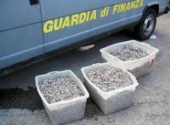 Villa San Giovanni (RC), sequestrati 100 kg di neonata