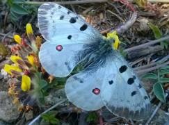 Calabria, scoperti insetti dell'entomofauna in Aspromonte