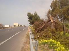 Bocale (RC), crollato albero su SS 106