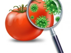 """Cosenza, seminario sulla """"Sicurezza Alimentare"""""""