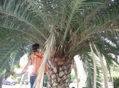 """Lazzaro (Rc), Crea : """" Un patrimonio arboreo non più salvabile"""""""