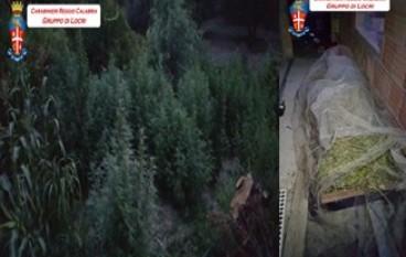 Scoperta a San Luca piantagione di droga, arrestati madre e figlio