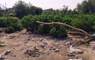 Cosenza, Camera di Commercio: chiesto stato di calamità naturale