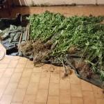 piante droga